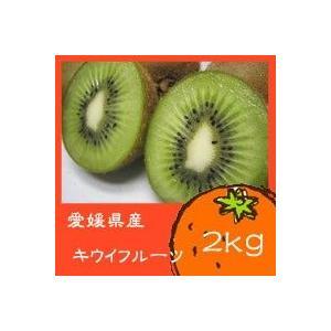 【送料無料】愛媛産 訳ありキウイフルーツ2kg※沖縄・離島は別途送料必要です!