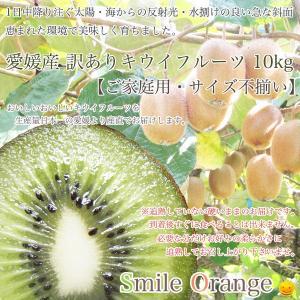 【送料無料】愛媛産 訳ありキウイフルーツ10kg※沖縄・離島は別途送料必要です!