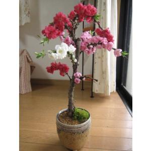 3色しだれ桃で お祝い  【鉢植え大】 【南京桃しだれ桃  】【桃】  豪華な三色桃の花   桃の花見で|smilefield
