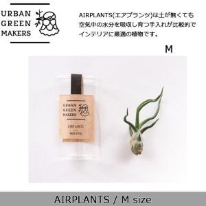 Urban Green Makers/アーバングリーンメーカーズ  AIRPLANTS SPECIAL MEDIUM(エアプランツ スペシャルM) /観葉植物 インテリア 【雑貨】|snb-shop