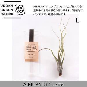 Urban Green Makers/アーバングリーンメーカーズ  AIRPLANTS SPECIAL LARGE(エアプランツ スペシャルL) /観葉植物 インテリア 【雑貨】|snb-shop