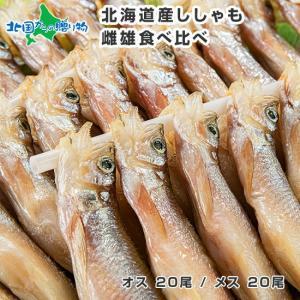 ししゃも 北海道 本物 海鮮 40尾 雌雄 食べ比べ 冷凍 ギフト お取り寄せ グルメ Gift|snowland