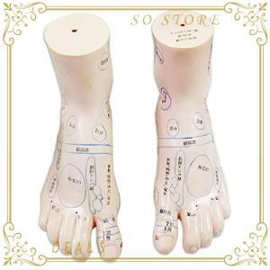 フェリモア 足 つぼ 模型 立体 体系的 足裏 甲 足首 足裏マッサージ 位置確認 足つぼ (左右セ...