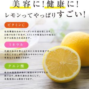 ドライフルーツ 塩レモン 250g 送料無料 輪切り 熱中症 対策 予防 ドライ 塩 レモン おやつ 南信州菓子工房 お菓子作りにも so-suke 10