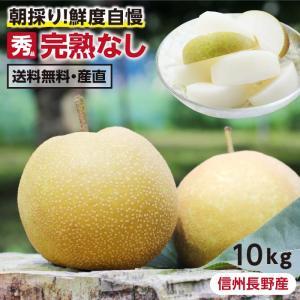 梨 長野県産 送料無料 秀品 10kg 幸水 豊水 二十世紀 南水 選べる品種 完熟なし 産地直送 甘い梨 旬の果物 ギフト お取り寄せ お中元|so-suke