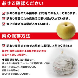 訳あり 梨 5kg 送料無料 長野県産 幸水 豊水 ご家庭用 お徳用 なし ナシ|so-suke|13