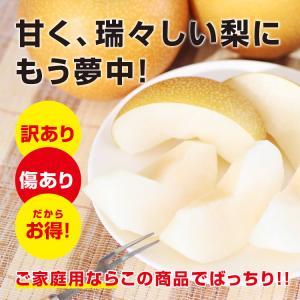 訳あり 梨 5kg 送料無料 長野県産 幸水 豊水 ご家庭用 お徳用 なし ナシ|so-suke|06