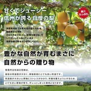 訳あり 梨 5kg 送料無料 長野県産 幸水 豊水 ご家庭用 お徳用 なし ナシ|so-suke|08