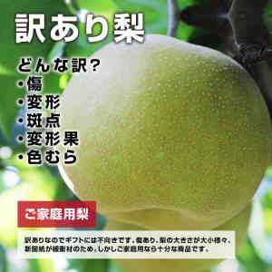 訳あり 梨 5kg 送料無料 長野県産 幸水 豊水 ご家庭用 お徳用 なし ナシ|so-suke|09