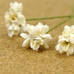 木の実ピック フラワーコーン 白 3本入 プリザーブドフラワー 花材 そらプリ|solargift