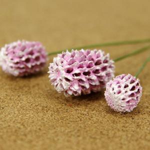 木の実ピック カシュリナ ツートンピンク 3本入 プリザーブドフラワー 花材 そらプリ|solargift