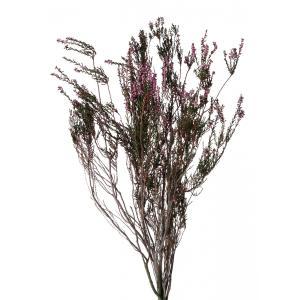 プリザーブド 花材 エリカ ピンク 袋 約70g 大地農園|solargift