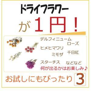 特価 1円 ドライフラワー フラワー お花|solargift