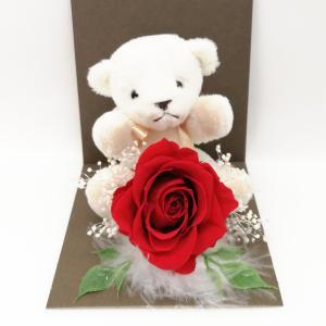母の日 ギフト プレゼント お花 クリアケース アリスレッド 個別 くま バラ solargift