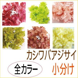 プリザーブドフラワー 材料 花材 カシワバアジサイ 全色 オール 小分け あじさい 紫陽花 大地農園|solargift