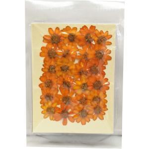 クリアリウム 押し花 百日草 オレンジ 24輪 草花 固まるハーバリウム|solargift