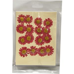 クリアリウム 花材 押し花 クリサンセマム レッド 16輪 固まるハーバリウム|solargift