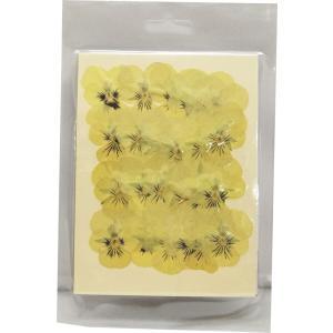 クリアリウム 押し花 ビオラS クリーム 24輪 草花 固まるハーバリウム|solargift