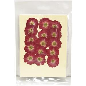 クリアリウム 押し花 ミニバラ ローズピンク 15輪 草花 固まるハーバリウム|solargift