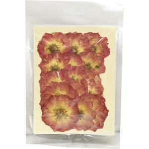 クリアリウム 押し花 バラ ローズピンク 15輪 草花 固まるハーバリウム|solargift