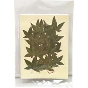 固まるハーバリウム クリアリウム 押し花 もみじ グリーン 20枚 草花|solargift
