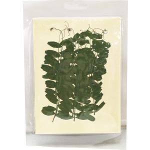 固まるハーバリウム クリアリウム カラスノエンドウ 20枚 草花|solargift