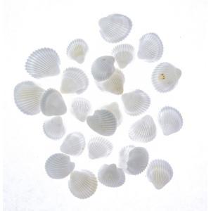 そらプリ アクセサリー 貝殻 小分け クラムローズ 約10g|solargift