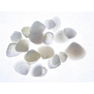 そらプリ アクセサリー 貝殻 小分け ホワイトカイカイ 約10g|solargift