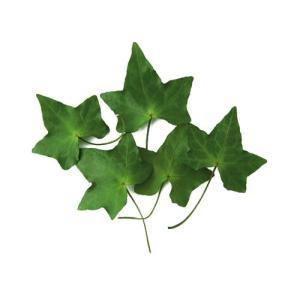 プリザーブドフラワー 花材 アイビーリーフ グリーン 小分け 3枚 そらプリ (フロールエバー)|solargift