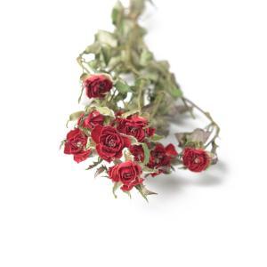 ドライフラワー 花材 SPローズ ダークレッド 約7〜8輪 そらプリ|solargift