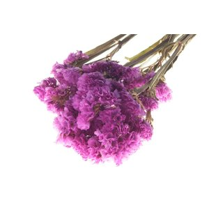 ドライフラワー 花材 スターチス ピンク 小分け そらプリ|solargift