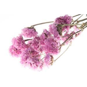 ドライフラワー 花材 スターチス ライトピンク 小分け そらプリ|solargift
