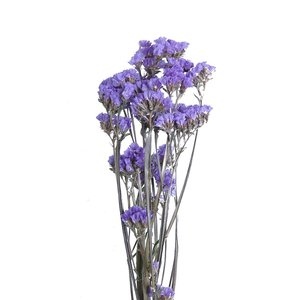 ドライフラワー 花材 スターチス ライトパープル 小分け そらプリ|solargift