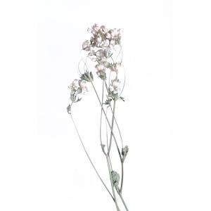 ドライフラワー 花材 アストランティア ホワイト 約3本 そらプリ|solargift