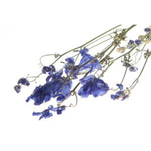 ドライフラワー 花材 ディルフィニューム ブルー 小分け そらプリ|solargift