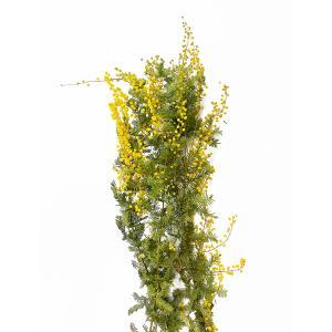 ドライフラワー 花材 ミモザ ナチュラル 小分け そらプリ|solargift