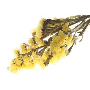 ドライフラワー 花材 スターチス イエロー 小分け そらプリ|solargift