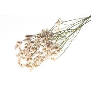 ドライフラワー花材 HDスターチス ホワイト 小分け そらプリ|solargift