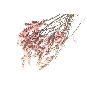ドライフラワー 花材 HDスターチス ピンク 小分け そらプリ|solargift