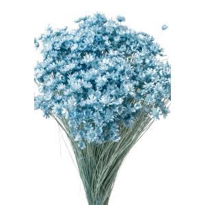 そらプリ ドライフラワー 花材 スターフラワー ミニ ベビーブルー 小分け|solargift
