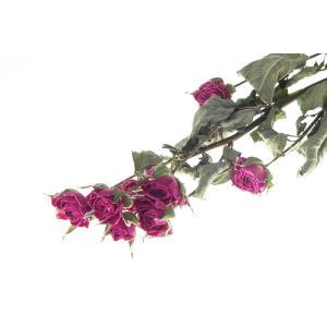 ドライフラワー 花材 SPローズ ルージュピンク 約7〜8輪 そらプリ|solargift