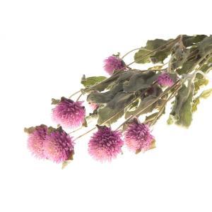 ドライフラワー 花材 千日紅 フレンチピンク 小分け約7〜8輪 そらプリ|solargift