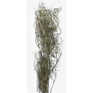 ドライフラワー 花材 ゴアナクロー 小分け そらプリ|solargift