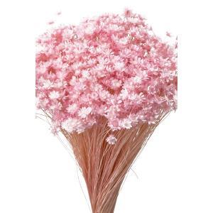 そらプリ ドライフラワー 花材 スターフラワー ミニ ブライダルピンク 小分け 約1/3〜1/4袋|solargift