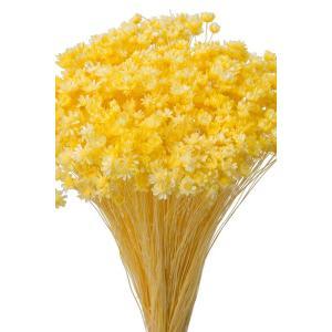 そらプリ ドライフラワー 花材 スターフラワー ミニ モーニングイエロー 小分け 約1/3〜1/4袋|solargift