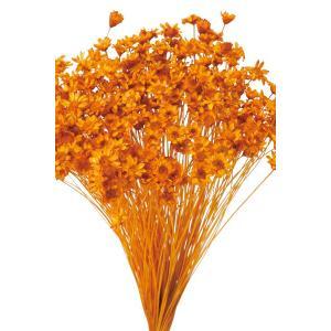 そらプリ ドライフラワー 花材 スターフラワー ミニ オレンジ 小分け 約1/3〜1/4袋|solargift