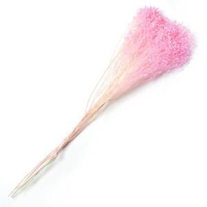 ドライフラワー 花材 ブルーム ライトピンク 小分け約1/3〜1/4袋 solargift