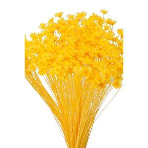そらプリ ドライフラワー 花材 スターフラワー ミニ イエロー 小分け 約1/3〜1/4袋|solargift