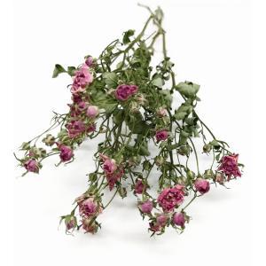 ドライフラワー 花材 リトルウッズ ピンク 約20輪 そらプリ