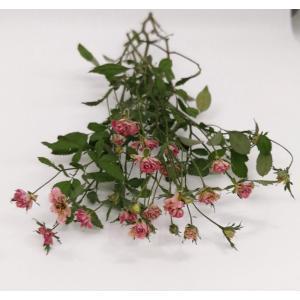 ドライフラワー 花材 リトルローズ・シリカ ピンク系 約10輪 そらプリ